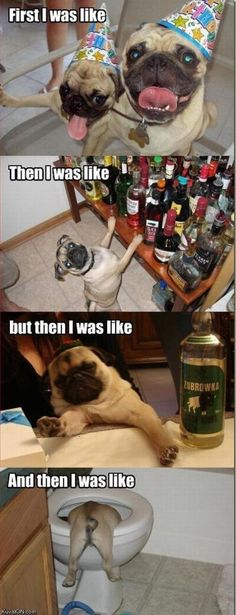 Silly pug!  Never drink in excess  :)