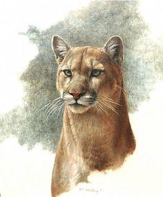 Finde Cougars in meiner Gegend