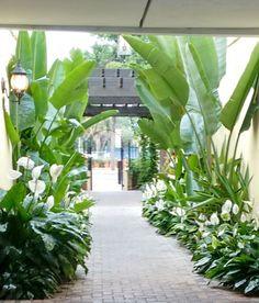50 tropical plants grow your own tropical garden 1 Tropical Backyard Landscaping, Tropical Garden Design, Backyard Garden Design, Small Tropical Gardens, Tropical Plants, Garden Design Ideas, Tropical Outdoor Decor, Palm Plants, Garden Ideas