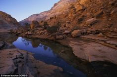 The region of the Wadi Zim, in the Negev desert is flooded every few years (pictured by this stock image) and has been since Biblical times....