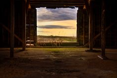 Seeing rural landscape through the barn door photography. Window view of a sunrise. Human Wings, Fine Art Prints, Canvas Prints, Window View, Doorway, Small Towns, Abandoned, Sunrise, Lens