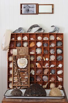 beautiful way to display all those sea shells that are collecting dust.