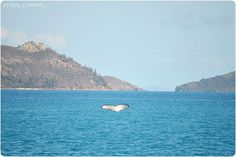 australie-cap-tribulation-hamilton-island-whitsundays-plages-paradisiaques-14