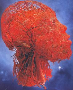 Body Worlds  circulatory system of a real human head