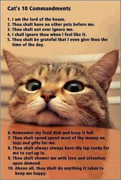 funny-animals-pictures-00093   FUNNY PICTURES