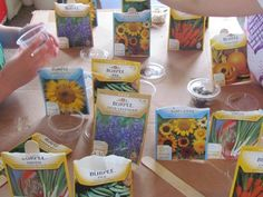 Explore seeds in a gardening center: Sort and organize seed packets by type of plant, height, germination time, etc., and predict what seeds will look like before opening the seed packets.