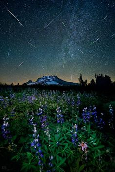 "From National Geographic. ""A flurry of meteors fills the starry skies above a lupine meadow and Mount Hood in Oregon on August 11."""