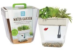 Bring the fun of aquaponics systems indoors with the Water Garden. This mini aquaponics fish tank is a self-cleaning fish tank that grows organic sprouts and herbs.