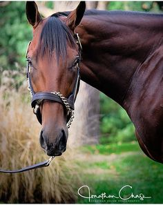 American Pharaoh 2018 All The Pretty Horses, Beautiful Horses, Derby Horse, Triple Crown Winners, American Pharoah, Sport Of Kings, Thoroughbred Horse, Racehorse, Horse World