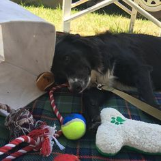 Doing it tough on holidays #gracie #graciegirl #raisinggracie #holidays #camping #toybox #portfairy #snoozing #lazybum by kimberley.m75 http://ift.tt/1UokfWI