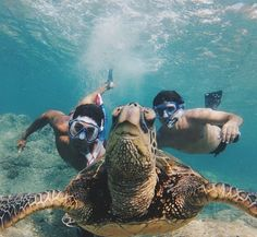 Swimming with their new Turtle bud