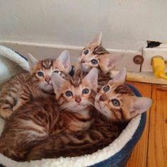 Beautiful kittens of Joel