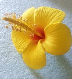 HibiscusYellow Yellow Hibiscus Flower Flower by msformaldehyde, $12.00