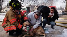 In this Dec. 9, 2010, file photo, Amira Bichara, right, gasps in relief when a golden retriever rescued from a house fire begins breathing normally, as a firefighter and resident administer oxygen in Kettering, Ohio. Under a new Ohio law taking effect Aug. 31, 2016, firefighters and EMTs can provide basic first aid to dogs and cats rescued from house fires, car accidents or other crisis situations, treatment that only licensed veterinarians could legally provide under existing law.