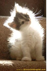 Cute kitty blocking the sunlight.
