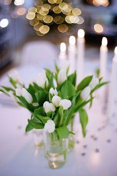 Tulip Tulpaner