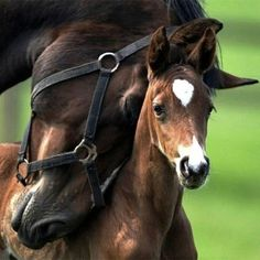 mothers and their young animals | their mothers baby animals with their mothers baby animals with their ...