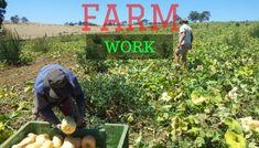 11 Logic Behind Why Everyone Should Work In Farm Australia
