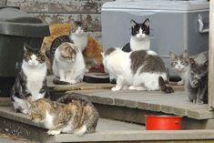 Jak pomóc kotom wolnożyjącym przetrwać zimę?