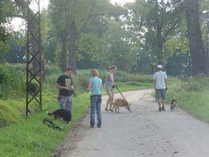 Szkolenia rozpoczęte, psy się uczą :-) #psy #adopcje #schronisko #polska