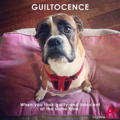 Guiltocence