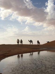 Rub' Al Khali, Selena Gomez Photos, Photo Chat, Unicorn Art, Unique Animals, Camels, Black And White Pictures, Location History, My Photos