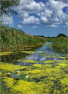 Wayland and District Photographic Club (WDPC Norfolk): Thursday 12th June 2014 - Strumpshaw Fen (RSPB) by Christine alcock