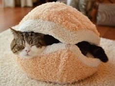 Clamshell for a cat