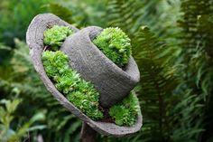 SecretGardenOfmine: My Existential Garden: Green Roof