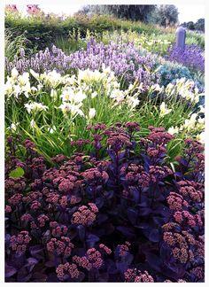 Sedum and lilies