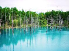 """日本には美しい名所がたくさん存在しますが、今回は「青い清流」をまとめてみました。神秘的な印象を与える色「青」と大自然が生んだ「清流」のコラボレーションは、眺めるだけで""""癒し""""を与えてくれます。また、「水晶のように輝く清流」「幻想的な七色ブルーの清流」など、如何にも体力が回復しそうな絶景を数多く掲載。そんな美しすぎる清流に詳しい専門家たちが、癒しの旅をナビゲートします!"""