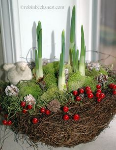 paper whites in a nest