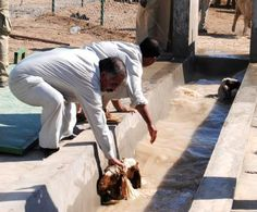 Iraqi farmers in white (they are sheep dipping)