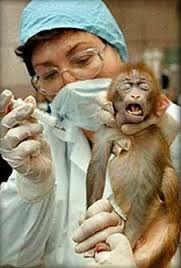 Resultado de imagen de maltrato animal en laboratorios