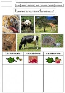 Comment se nourrissent les animaux Teaching Science, Science Activities, Classroom Activities, Activities For Kids, Herbivore And Carnivore, French Teaching Resources, First Grade Science, Forest Theme, French Immersion
