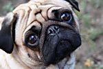 10 choses à ne pas faire devant un chien