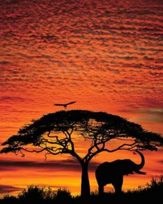 elephant under tree with orange sunset