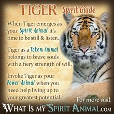 Tiger Spirit Totem Power Animal Symbolism Meaning Tiger Spirit Animal, Spirit Animal Totem, Animal Spirit Guides, Your Spirit Animal, Animal Totems, Animal Reiki, Spiritual Animal, Spiritual Growth, Animal Meanings