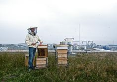 Berlin rooftop beekeepers - Bettina Madita Böhm