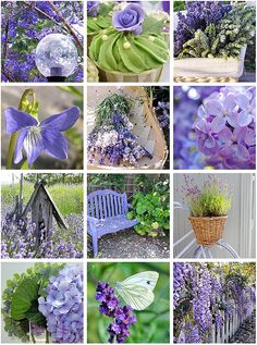 lavender & green by eve Purple Love, All Things Purple, Purple Lilac, Shades Of Purple, Green And Purple, Purple Flowers, Periwinkle, Lavender Green, Lavender Fields