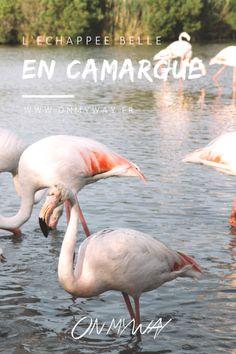 L'échappée belle en Camargue - On my way   Blog de voyage entre Corse & bouts du monde
