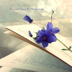A Beautiful Book by =Aeternum-Art on deviantART