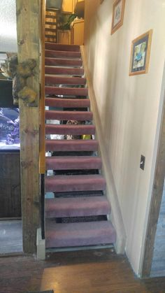 Ugly 1987 pink carpet stairs. Stair Makeover, Pink Carpet, Carpet Stairs, Wood Laminate, Rug Runner, New Homes, Home Decor, Decoration Home, Room Decor