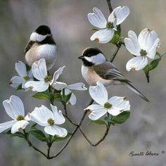 Pájaros sobre flores