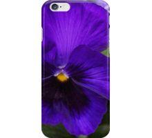 Purple Panzi in Full Bloom iPhone Case/Skin