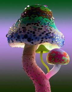 Magic Mushroom Image, Mushroom Images, Mushroom Pictures, Mushroom Art, Mushroom Wallpaper, Poisonous Mushrooms, Mushroom Lights, Broken Glass Art, Coral Art