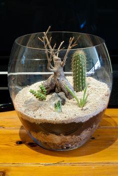 Succulent Terrarium | My first attempt at making a terrarium… | Flickr