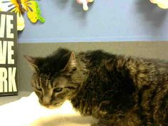No longer listed- ID#A440559  I am described as a neutered male, black tabby Domestic Shorthair mix.  The shelter thinks I am about 10 years old.  I have been at the shelter since Sep 17, 2014 and I am available for adoption now!  If you think I am your missing pet, please call or visit right away. Otherwise, please visit me in person as shelter staff are busy caring for my needs.