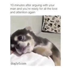 Who thinks these are funny? Cute Little Animals, Cute Funny Animals, Funny Cute, Cute Animal Videos, Cute Animal Pictures, Funny Dog Videos, Funny Dogs, Cute Puppies, Cute Dogs