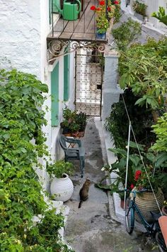 Poros Island, Greece Poros Greece, Ancient Greece, Greek Islands, Gates, Doors, Traditional, Big, Outdoor Decor, Travel